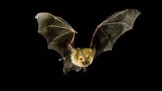 Bats In Bats Lessons Tes Teach