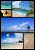 collage tropical beach royalty  stock images image