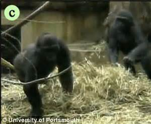 News Roundup Bushfires Jellyfish And Gorillas Attack by Gorillas Play Of Tag Just Like Human Children