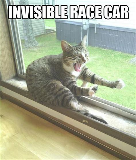 Funny Cing Meme - top 25 funny animals photos and memes quotes and humor