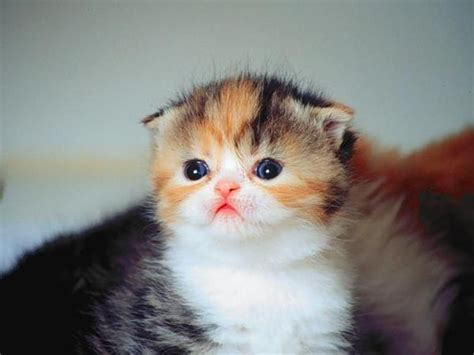 wallpaper kucing kucing imut emy emo