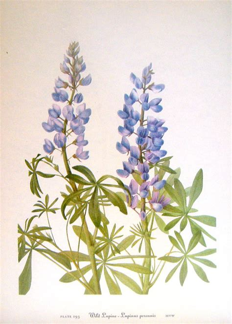 sticker by number beautiful botanicals 12 floral designs to sticker with 12 mindful exercises books flower print lupine redbud 2 sided 1950 s