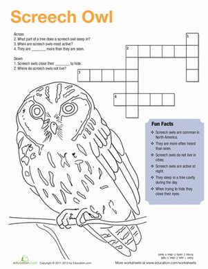printable owl worksheets screech owl facts worksheet education com