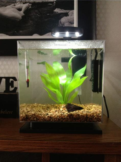 Betta Decorations by Types Of Bowl Betta Fish Tank Heaters House Photos