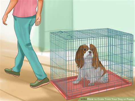 puppy cries when i leave the room 6 ways to crate your or puppy