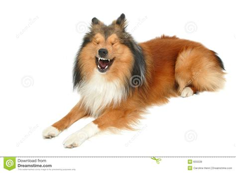 laughing puppy laughing royalty free stock images image 655539