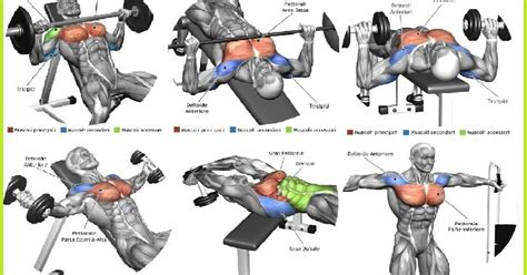 best bench workout for chest the top 5 chest muscle exercises all bodybuilding com