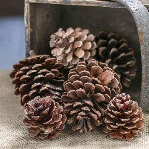 glittered pinecones glittered pinecones