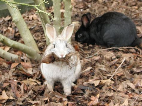 Rabbits In Garden by How To Prevent Rabbits From Your Garden Gardens