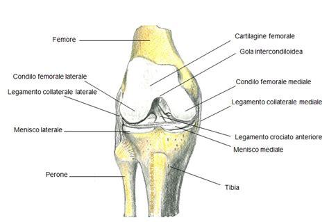 dolore ginocchio sinistro interno pollice dello sciatore artros