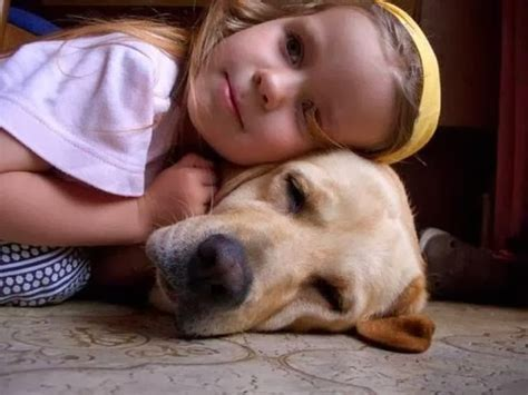 best puppies for families medium sized dogs hair breeds picture