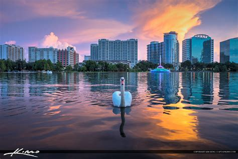 park orlando lake eola park swan in downtown orlando florida