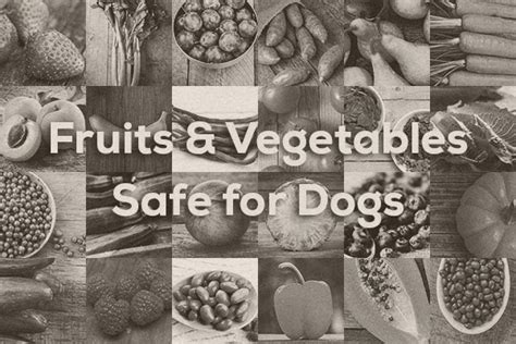 vegetables safe for dogs fruits and vegetables safe for dogs