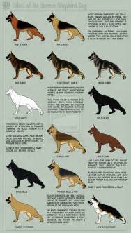 german shepherd color chart the whites inumonogatari