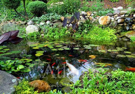 Maskara Ponds 2 In 1 galleries pond atlantic water gardens