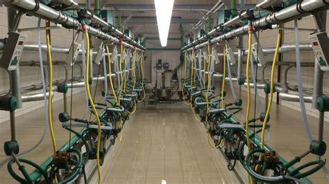 swing melkstand suche melkstand und kraftfutterstation