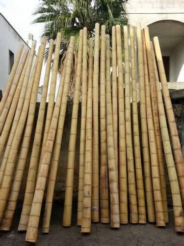 bambu arredamento canne bambu da arredo idea d immagine di decorazione