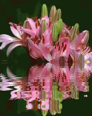 beautiful gifts of springtime happy flowers gif are we ready for springtime