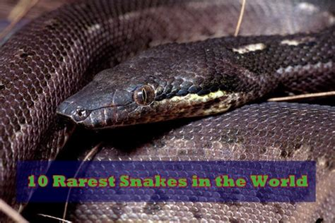 rarest in the world 10 rarest snakes in the world
