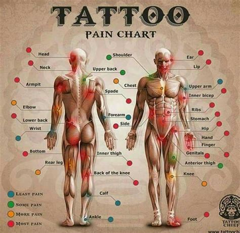 tattoo aftercare exercise tattoo pain chart good to know pinterest herzschlag