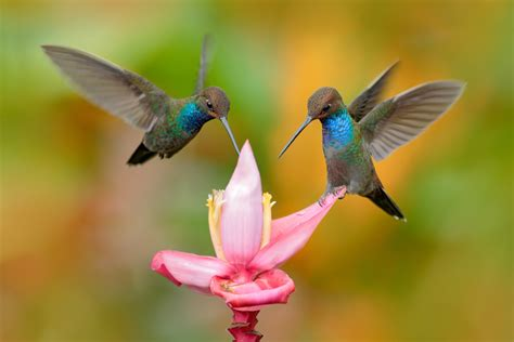 how to attract hummingbirds southeast agnet