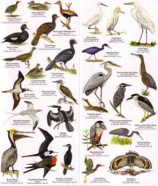 backyard birds of identification 2017 2018 best