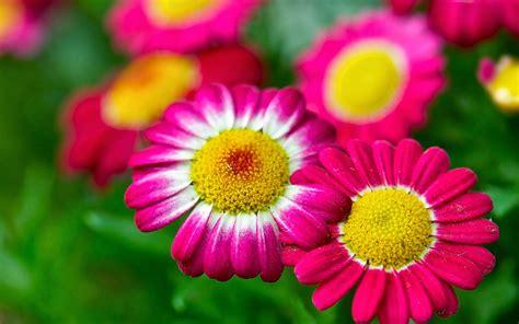 imagenes las flores mira estas imagenes de las flores m 225 s hermosas del mundo