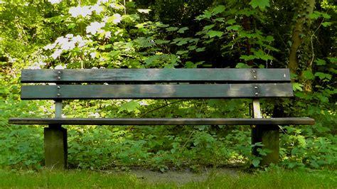 bos bank gratis afbeeldingen bos zomer groen rust uit