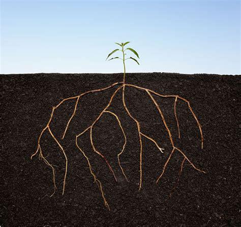 start  mentoring program human resources