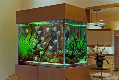 interior decoration with aquarium aquarium
