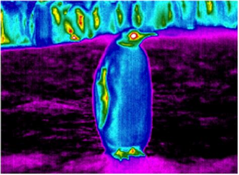 What Are Infrared Used For Infrared Images Reveal Frigid Purple Penguins Wired