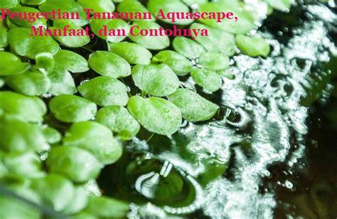pengertian tanaman aquascape manfaat  contohnya