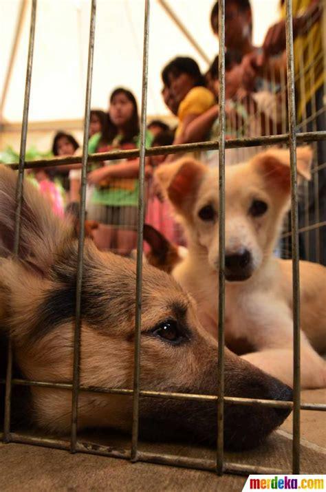 foto central park mall jakarta gelar festival anjing merdeka