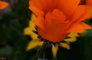 flowers blooming blooming flower on tumblr