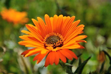 fiori arancioni nomi la fioritura deserto in sud africa tour da lamberts