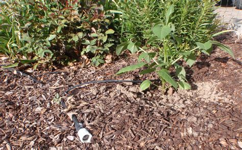 flower bed watering system flower bed watering system 28 images drip irrigation