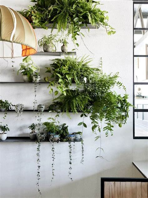 Indoor Plant Design | how to decorate your interior with green indoor plants and