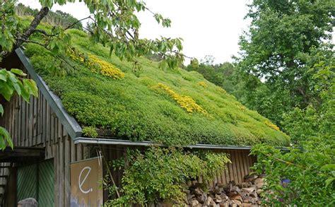 Contemporary Garage Design pflanzen f 252 r die dachbegr 252 nung dachbegr 252 nung information