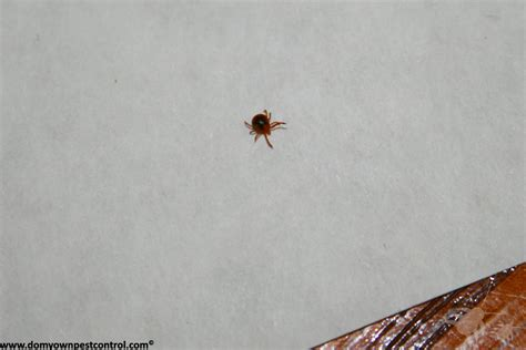 what does a tick bite look like on a what does a tick bite look like www imgkid the image kid has it