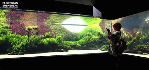World's largest nature aquarium is an inspirational treasure Marquee lite, More Videos, News