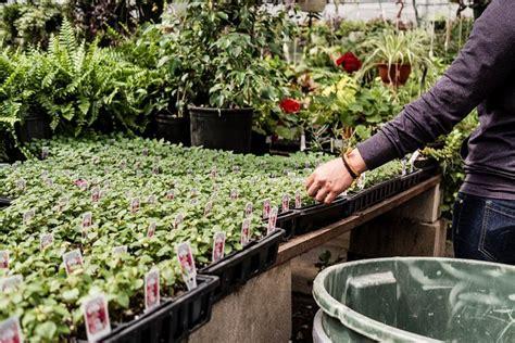 vasi viridea viridea cusago speciali garden center viridea