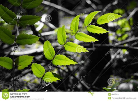 bright green foliage plants green plant stock photo image 60465223