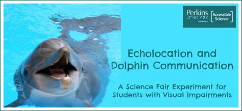 dolphin talk how we can talk with dolphins in 5 easy steps age books understanding echolocation for students with visual