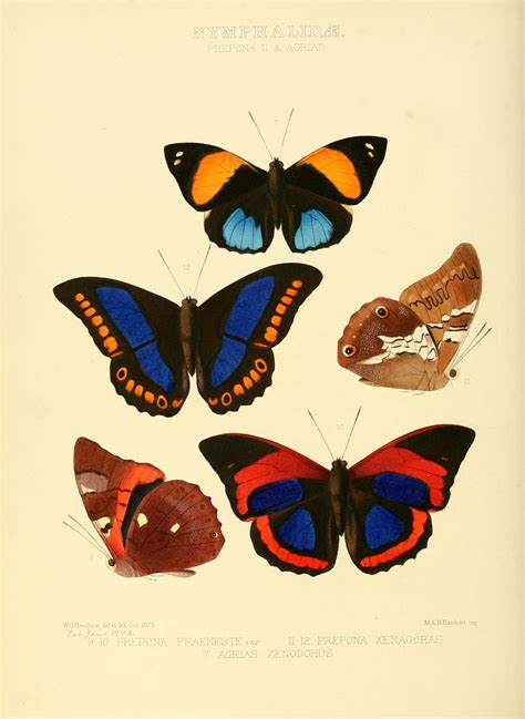 Butterflies Home Decor File Illustrations Of New Species Of Exotic Butterflies