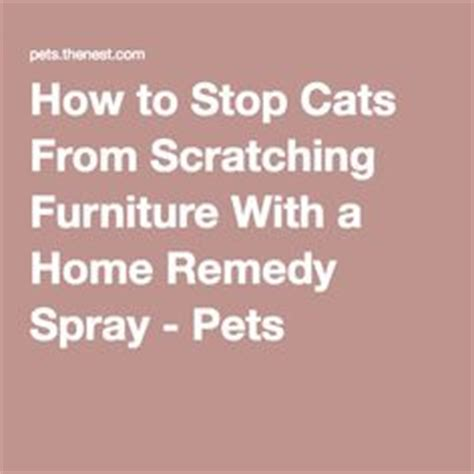 1000 images about stop cats from spraying on
