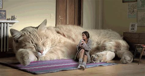 giant cat couch funny animated gif