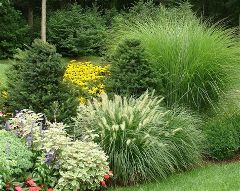 Evergreen Landscaping Ideas Mixing Ornamental Grasses With Evergreens Works Well In An Exuberant Plant Border Sweet