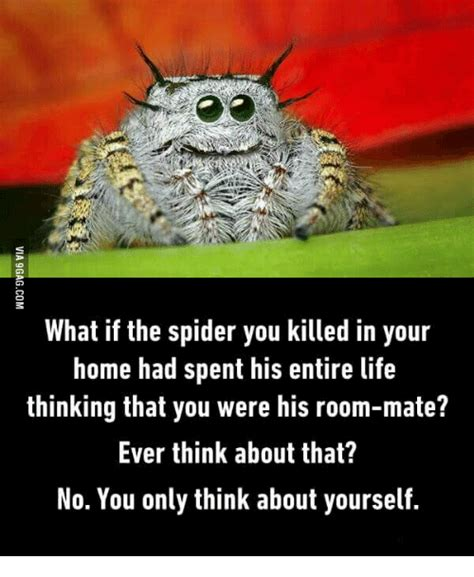 Spider In House Meme - how to get bugs out of your home without killing them peta