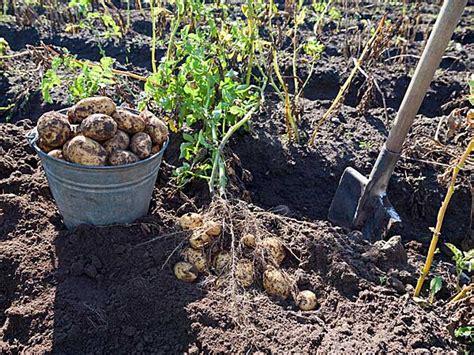 Root Vegetables For Your Garden Boldsky Com Root Vegetable Garden
