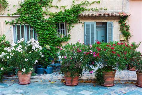 oleandro in vaso come coltivare l oleandro in vaso 5 consigli per ornare
